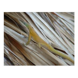 Aneole Lizard Postcard