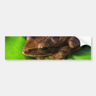 anfibios anuran de la rana de la rana arbórea etiqueta de parachoque
