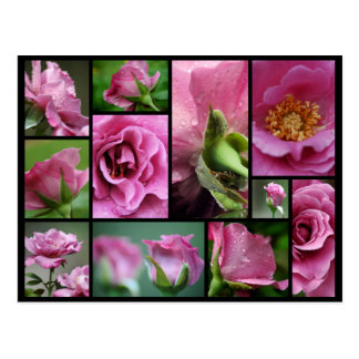 Angel Face Rose Collage Postcard