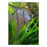 Angel Fish Card