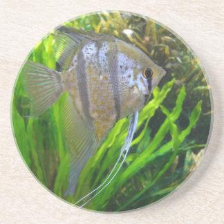 Angel Fish Coaster
