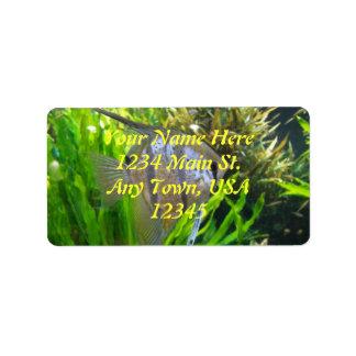 Angel Fish Label