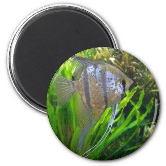 Angel Fish Magnet