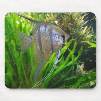 Angel Fish Mousepad