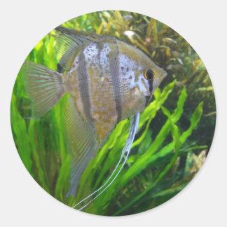 Angel Fish Round Stickers