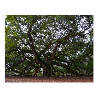 Angel Oak, John's Island, South Carolina Postcard