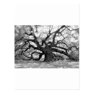 Angel Oak Postcard