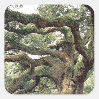 Angel Oak Tree 1,000 years old Square Sticker