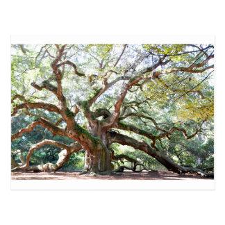 Angel Oak Tree Gifts Postcard