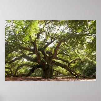 Angel Oak Tree ~ Johns Island, South Carolina Poster