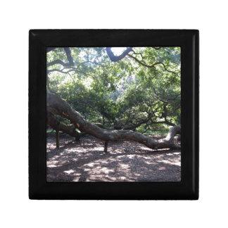 Angel Oak Tree Limbs Trinket Boxes