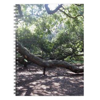 Angel Oak Tree Limbs Spiral Notebook