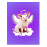 Angel Pig Post Card
