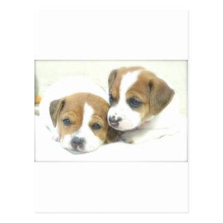 Angel Puppies Postcard