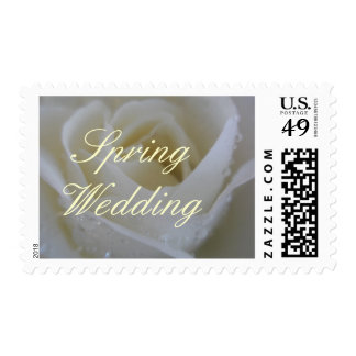 ~ Angel Rose ~ Prettiest White Spring Rose Postage Stamps