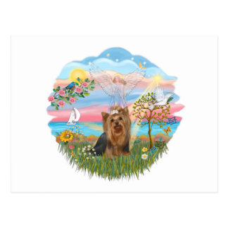 Angel Star-Yorkshire Terrier 7 Post Cards