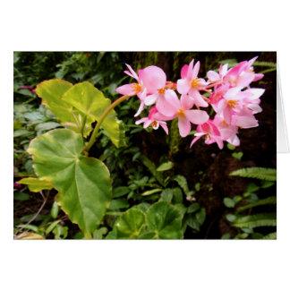 Angel wing Begonia Greeting Card