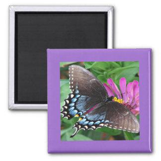 Ángeles de las naturalezas el imán de la mariposa