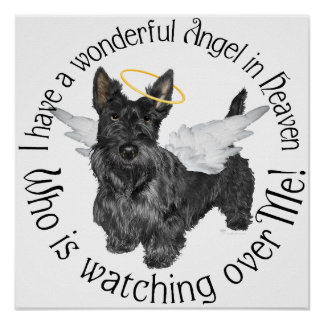 Ángeles de Terrier del escocés Poster