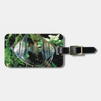 angelfish 2 bag tag
