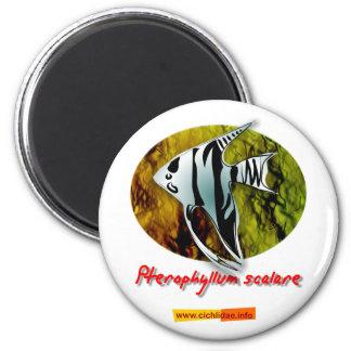 Angelfish 2 Inch Round Magnet