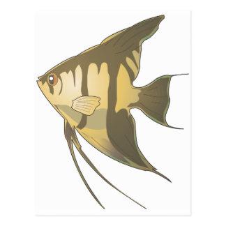 Angelfish 2 tarjeta postal