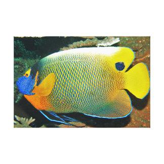 Angelfish amarillo de la cara impresión en lienzo