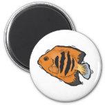 angelfish anaranjado y negro iman de nevera
