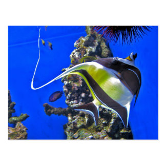 Angelfish at the Aquarium Post Cards
