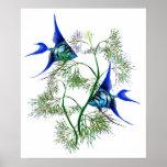 Angelfish azul en plantas poster