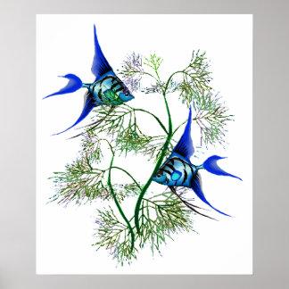 Angelfish azul en plantas póster