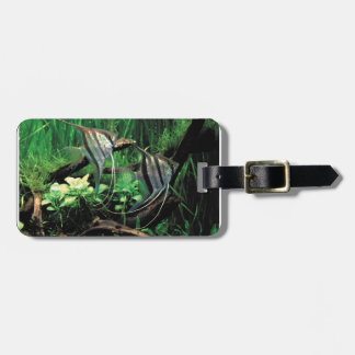 ANGELFISH BAG TAG