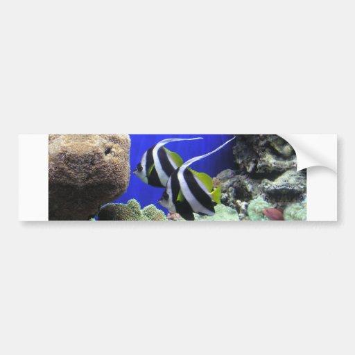 Angelfish Bumper Sticker