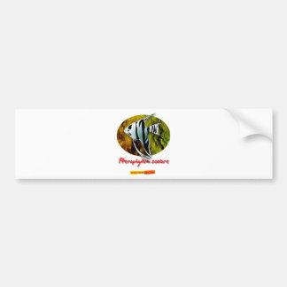Angelfish Car Bumper Sticker