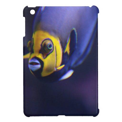 angelfish con gafas