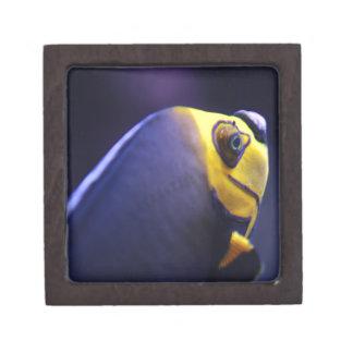 angelfish con gafas caja de regalo de calidad