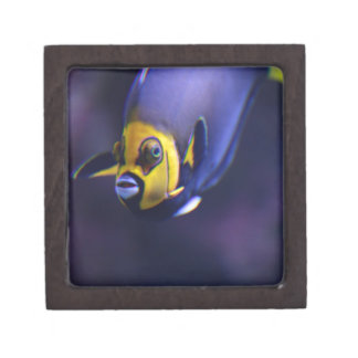 angelfish con gafas cajas de regalo de calidad