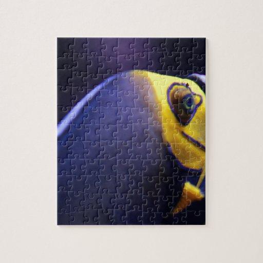 angelfish con gafas puzzle