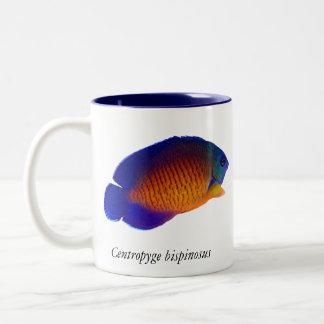 Angelfish coralino de la belleza - taza del