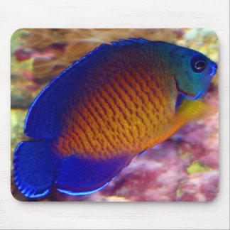 Angelfish coralino Mousepad de la belleza