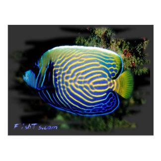 Angelfish de Emporer Postales