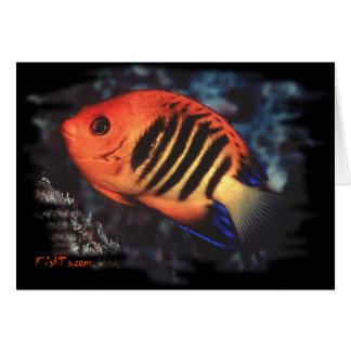 Angelfish de la llama por H2Oasis Tarjeta De Felicitación