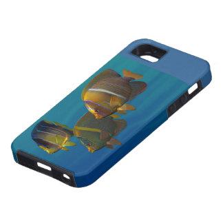 Angelfish de la natación iPhone 5 carcasas