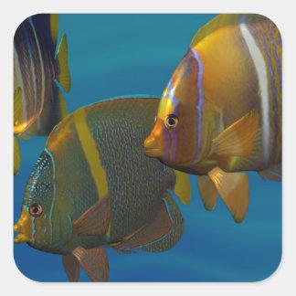 Angelfish de la natación pegatina cuadrada