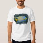 Angelfish de la reina camisas