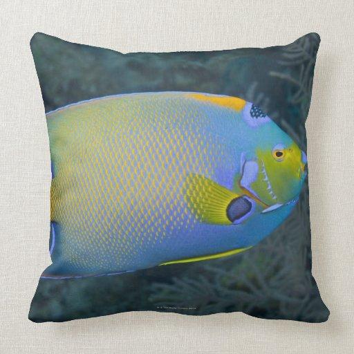Angelfish de la reina cojín