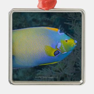 Angelfish de la reina adorno cuadrado plateado