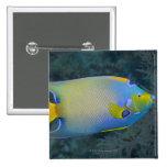 Angelfish de la reina pin cuadrado