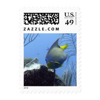 Angelfish de la reina envio