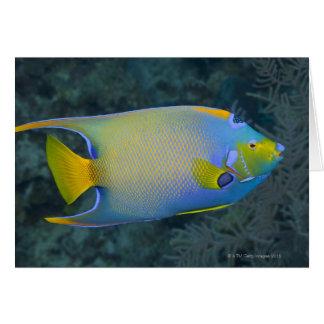 Angelfish de la reina tarjeta de felicitación